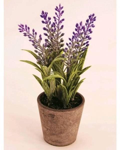 ASKO - NÁBYTOK Umelý kvet v kvetináči Levanduľa, 21 cm%
