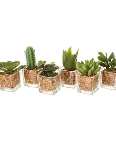Sada 6 umelých dekorácii v tvare kaktusov Unimasa